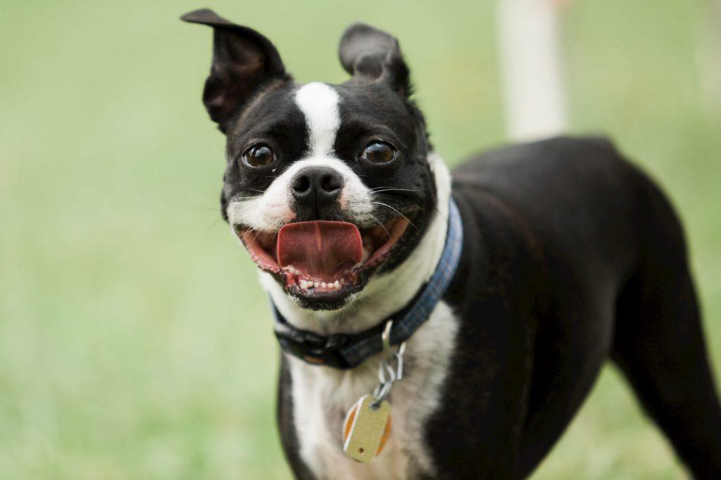 Pet photographer, New Castle, PA