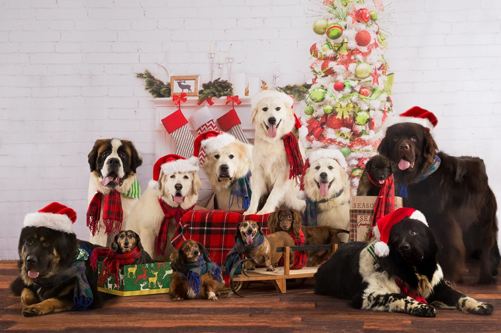 13 dogs wearing Christmas hats and scarves